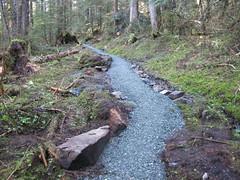 woodland, trail, geology, forest, wilderness, rock,
