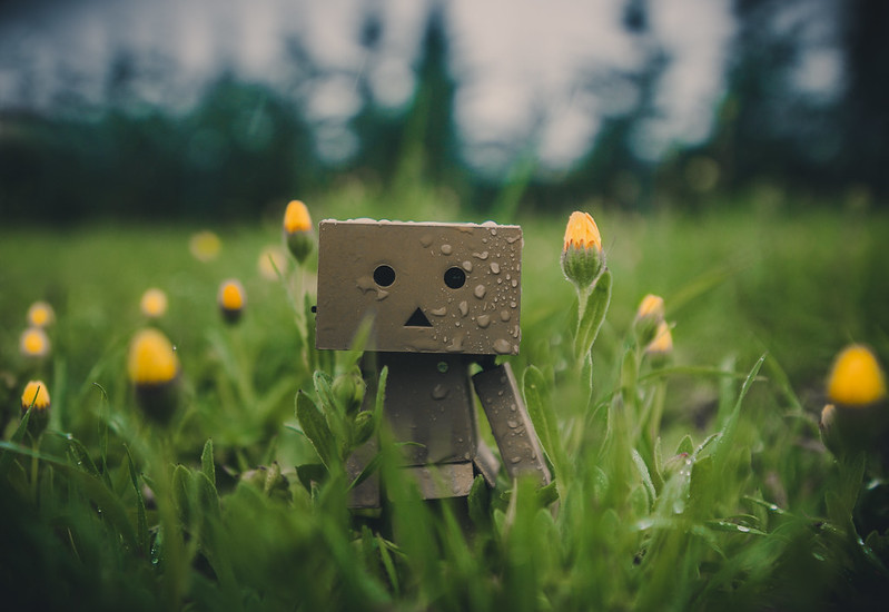 Danbo under the rain