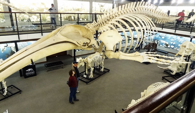 osteology museum - unique things to do in oklahoma city