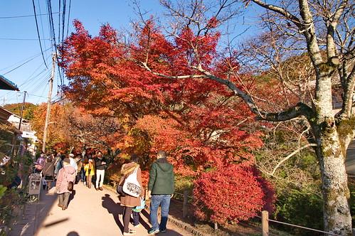 【写真】2012 紅葉 : 哲学の道/2020-10-03/IMGP7442