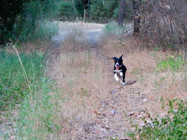 Walt in the woods