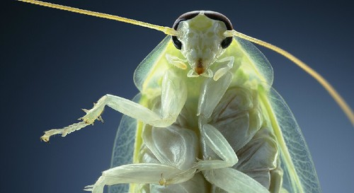 Tim Flach insect