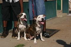 Dogs on Chippewa