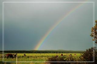 36-rainbow