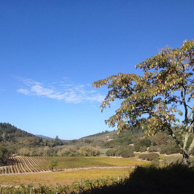 Vineyard view.