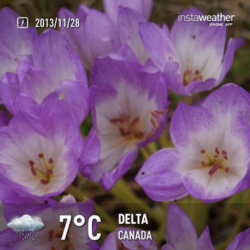 #weather #instaweather #instaweatherpro  #sky #outdoors #nature #world #love #followme #follow #beautiful #instagood #fun #cool #like #life #nice #happy #colorful #photooftheday #amazing #delta #canada #night #autumn #cold #ca