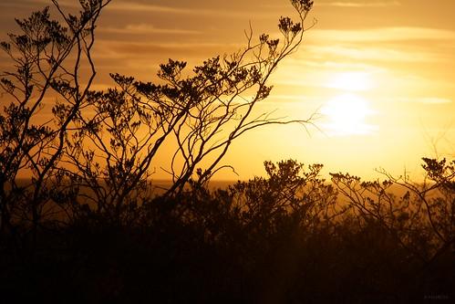 sunset sun plant mountains silhouette franklin texas desert elpaso franklinmountains