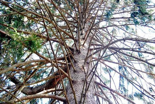 barren tree-001