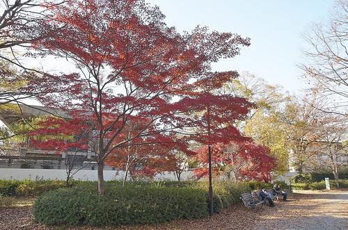 【写真】紅葉 : 岡崎公園