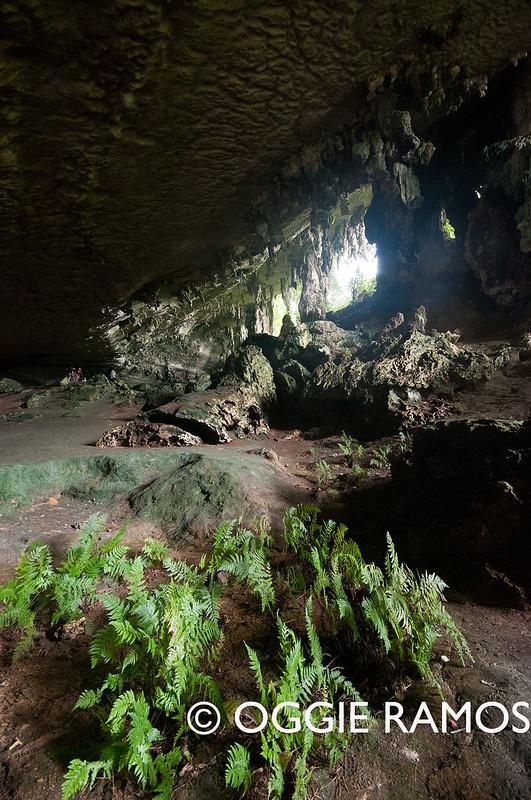 Miri Niah Cave Ferns