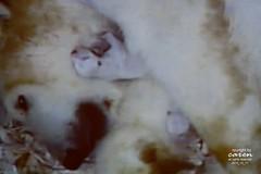 Birth of Giovanna's Twins