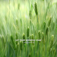 emmer, hordeum, prairie, agriculture, triticale, einkorn wheat, rye, food grain, field, barley, wheat, plant, green, paddy field, crop, meadow, cereal, plant stem, grassland,