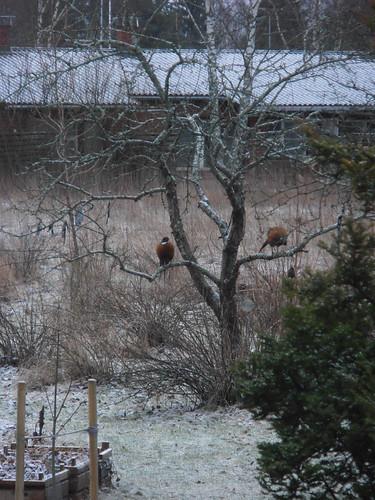 talvi 2014 023