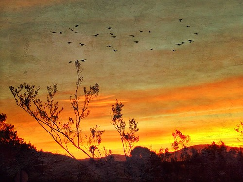 Winged Wonders in the Sunrise