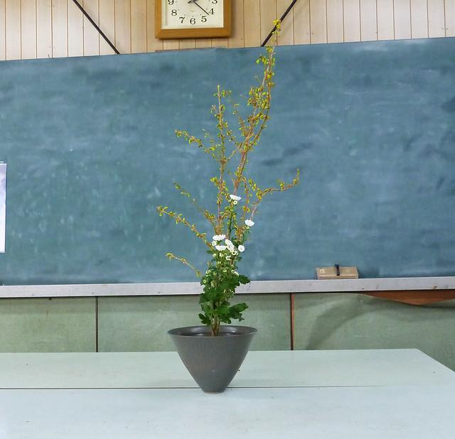 【生花二種生け】レンギョウ、小菊