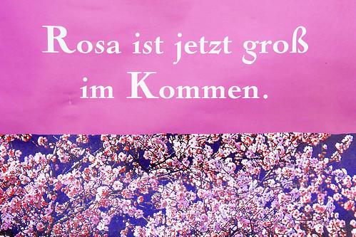 Mandel Mandelbaum Mandelbüte Mandelblütenfest Gimmeldingen Pfalz Blüte Frühling Frühjahr