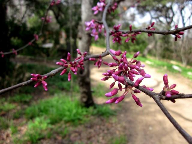 Zilker Botanical Garden in Austin, by Susan Moore