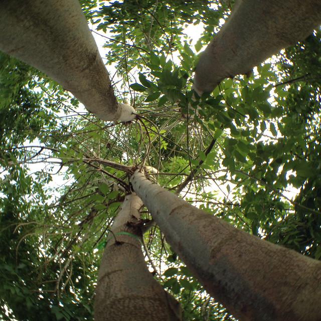 Trees-39