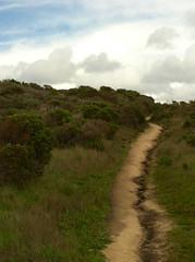 scarred pathway/Carmel Meadows