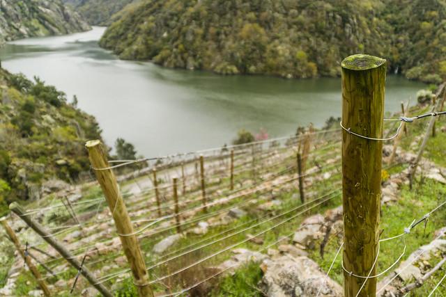 Zonas de cultivo de uva en los Cañones del Sil