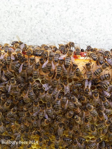these girls have been busy! Their hive was very full.