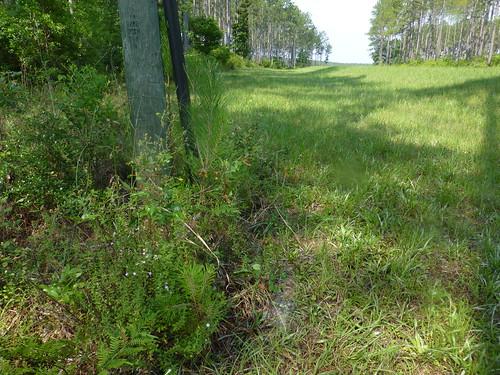 oakgrove calhouncounty cypresspoint may2014 raremint
