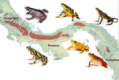 animal figure, fauna, illustration,