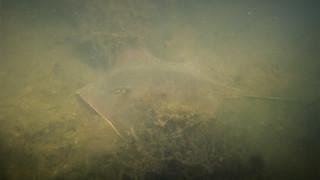 Indian River Paddling-008