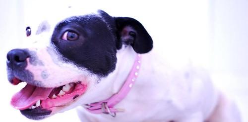 Image of Dotty