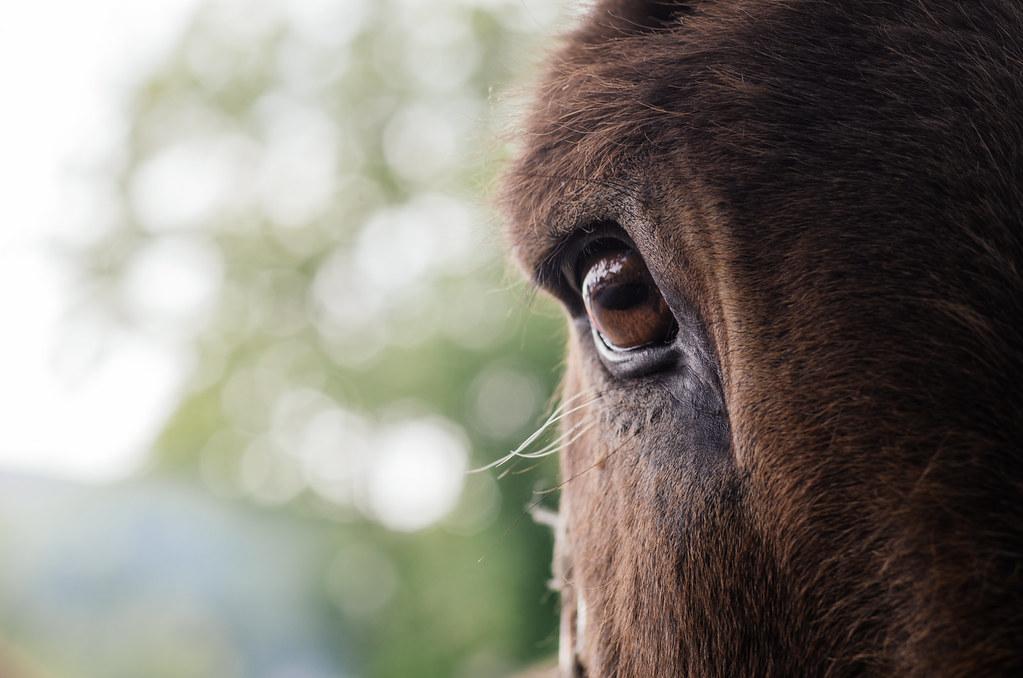 Randonner en argone - Balade en âne - Portrait d'âne