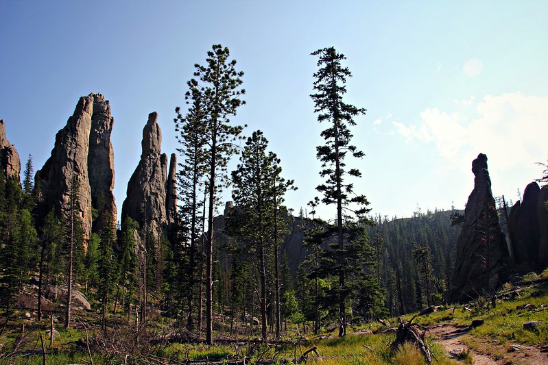 Custer State Park - Cathedral Needles