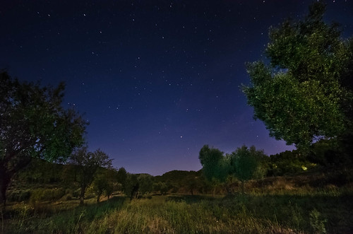 Olive trees in the night