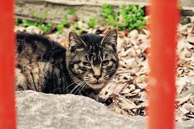 Today's Cat@2017-03-08