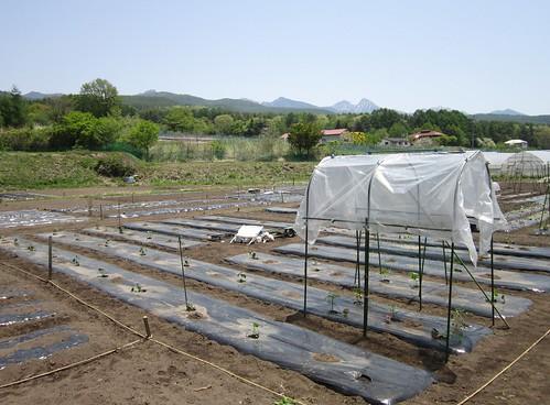 植え付けの進む畑 2013年5月22日11:33 by Poran111
