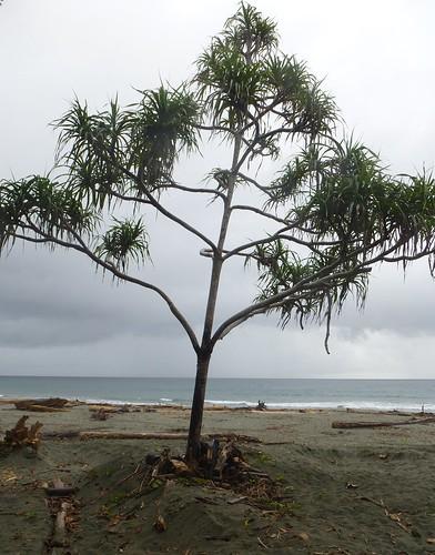 Papua13-Manokwari (53)