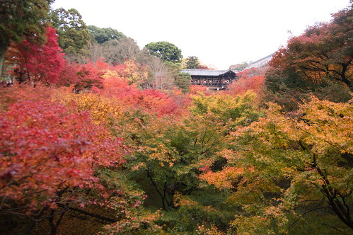 【写真】2012 紅葉 : 東福寺(2)/2017-11-27/IMGP7163