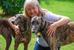 Fostered Greyhounds