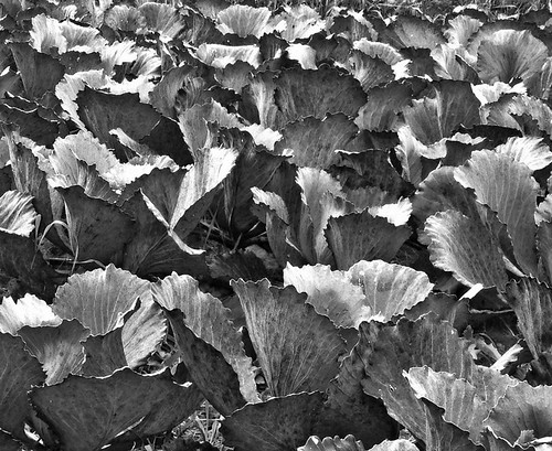 Leafery Black and White