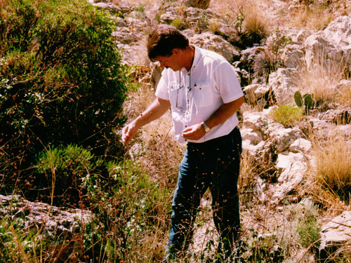 An early career picture of Nelson Foster examining vegetation for insect pests.