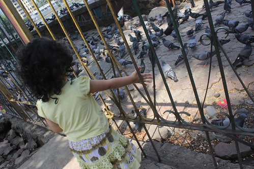 Nerjis Feeding The Pigeons Bandra Talao by firoze shakir photographerno1