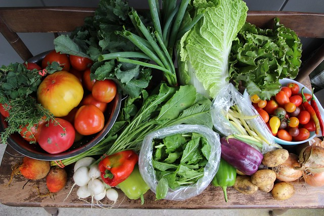 csa share :: week 13 (and the truth about tomatoes)