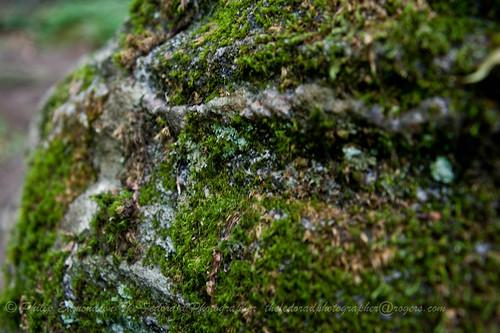 Moss and Quartz