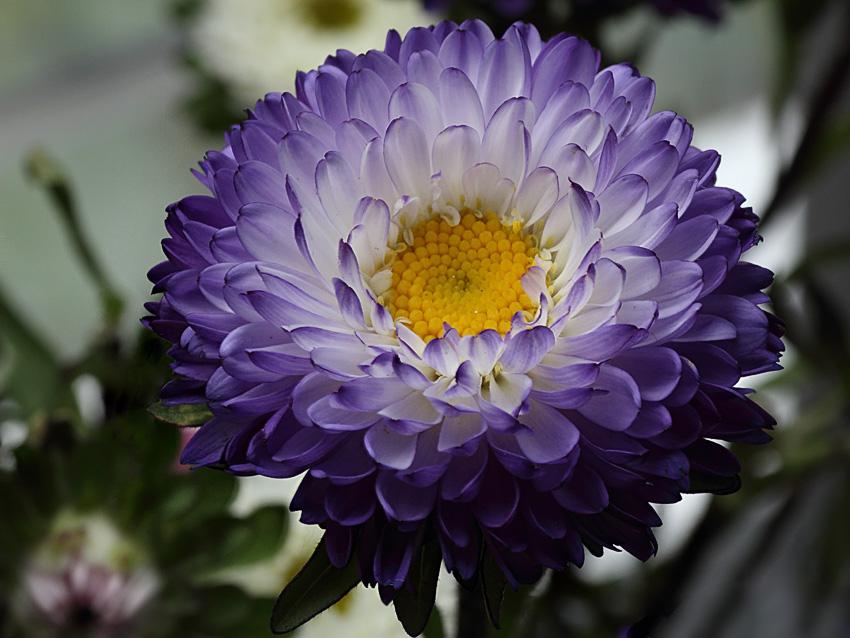 IMAGE: http://farm4.staticflickr.com/3666/9796156166_e3bb59c2fe_o.jpg