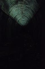 Helensburgh Metro Tunnel Gloworms