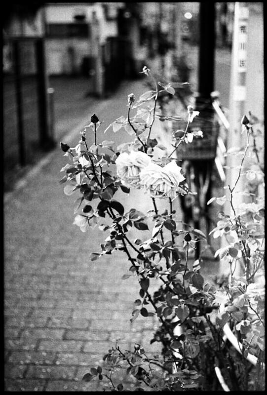 20131122 Leica3fSummar50 400TMY D76 StandDev 016