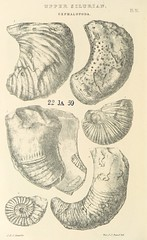 """British Library digitised image from page 694 of """"Siluria. The history of the oldest known rocks containing organic remains, with a brief sketch of the distribution of Gold over the Earth"""""""