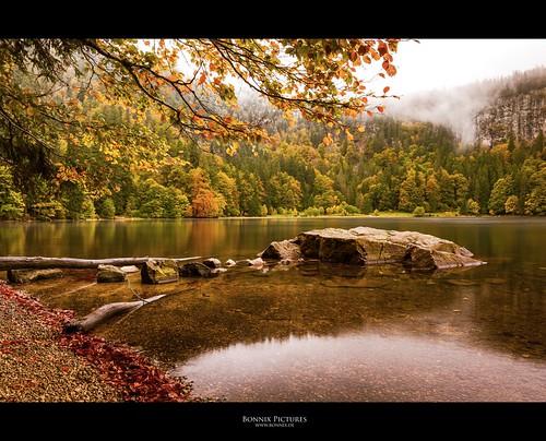 wood autumn sea mist snow reflection water rock germany leaf nikon harmony blackforest feldberg feldsee d700 nikkor247028