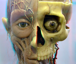 Anatomical Models 3D