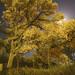 Folsom Point by Arbor Aesthetics