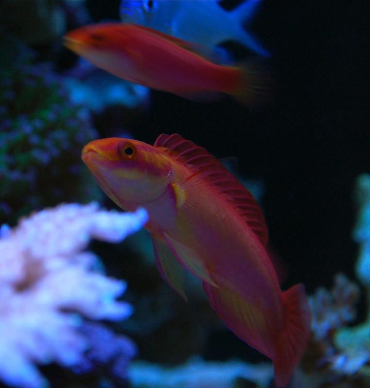 Fish Photos Manhattan Reefs